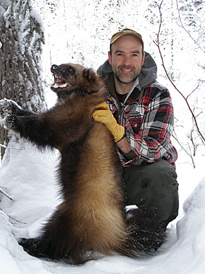 Photo of a trapper with a wolverine