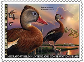 2019 Federal Migratory Bird Hunting Stamp