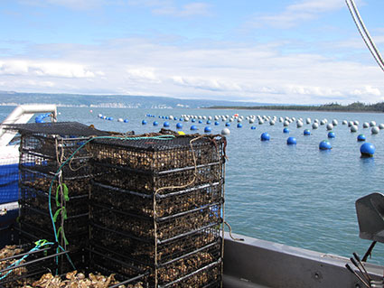 Photo of aquatic farming in Alaska