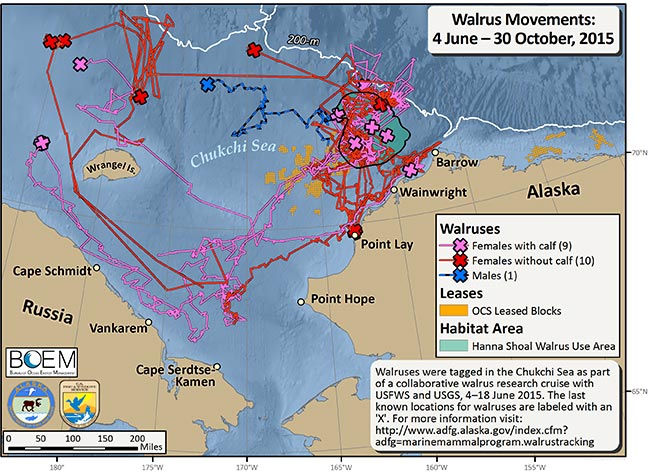 Most Recent Walrus Tracking Map