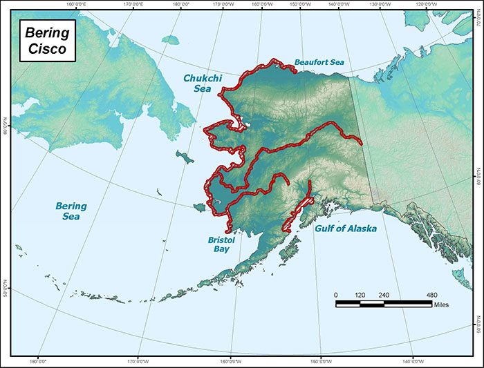 Range map of Bering Cisco in Alaska
