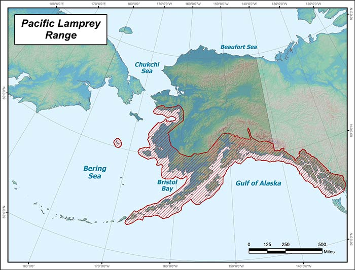 Range map of Pacific Lamprey in Alaska
